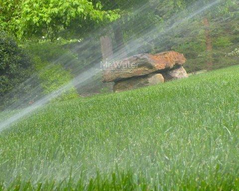 У Дубліні заборонили поливати газони