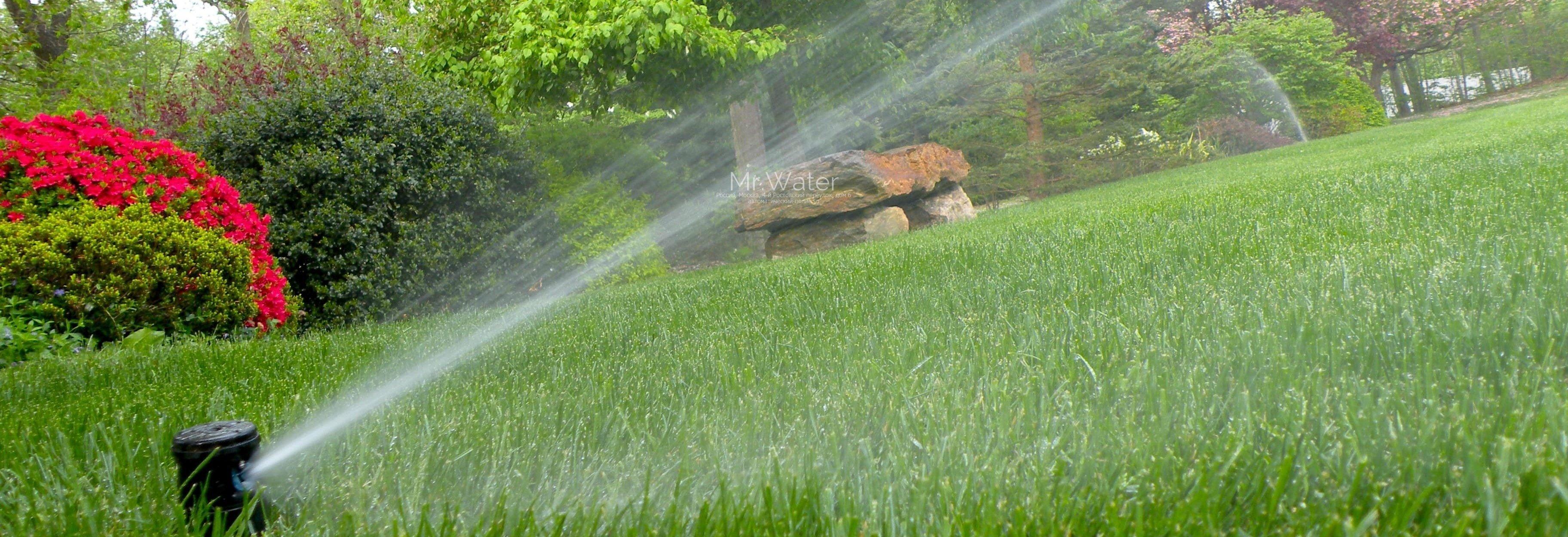 В Дублине запретили поливать газоны