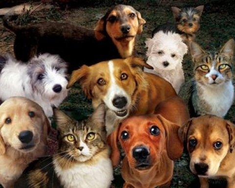 Українцям хочуть заборонити купляти собак та котів: стало відомо чому