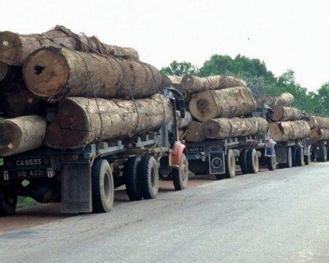 Чому Порошенко відмовився підтримати закон про відповідальність за контрабанду лісу