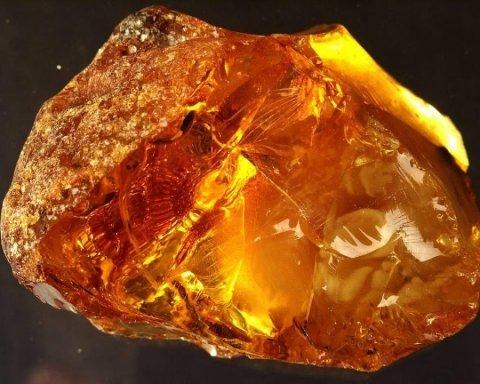 Ученые обнаружили интересную находку в янтаре