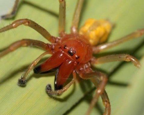Самый ядовитый паук в мире укусил украинца