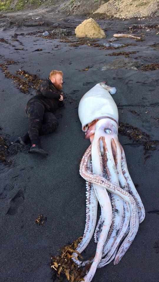 На пляже нашли морское чудовище, которое быстро спрятали от посторонних