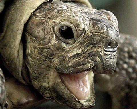 У Китаї знайшли гібрид черепахи та птаха