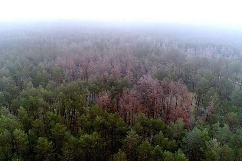 Опасный вредитель может стать причиной экологической катастрофы в Украине