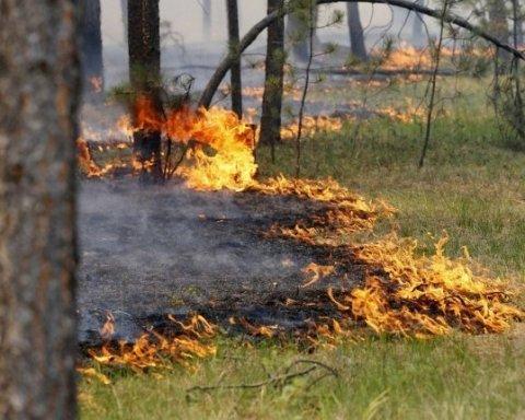 ГСЧС предупредила украинцев о чрезвычайном уровень пожарной опасности