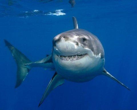 Британец случайно снял гигантскую акулу-лисицу: уникальные кадры