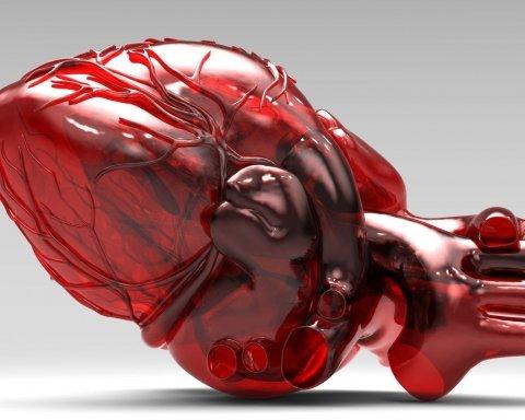 Названы лучшие продукты для здоровья сердца: список