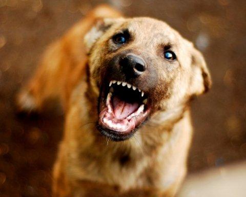 Травмував двох мам: у Дніпрі чоловік нацькував собаку на дітей
