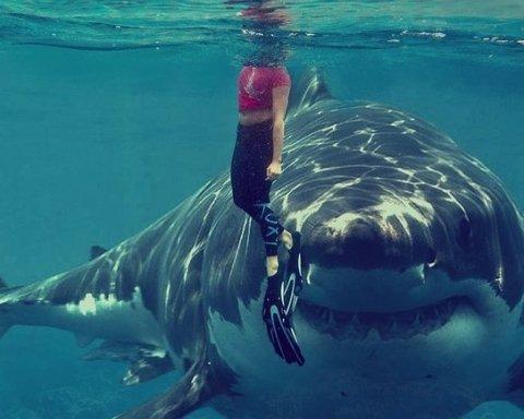 Акула вбила туриста на популярному курорті