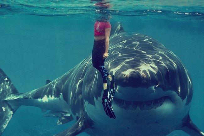 Акула убила туриста на популярном курорте