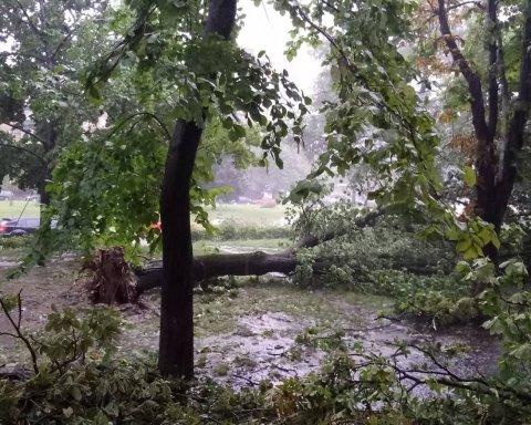 Буря в Києві паралізувала рух транспорту, повалено десятки дерев