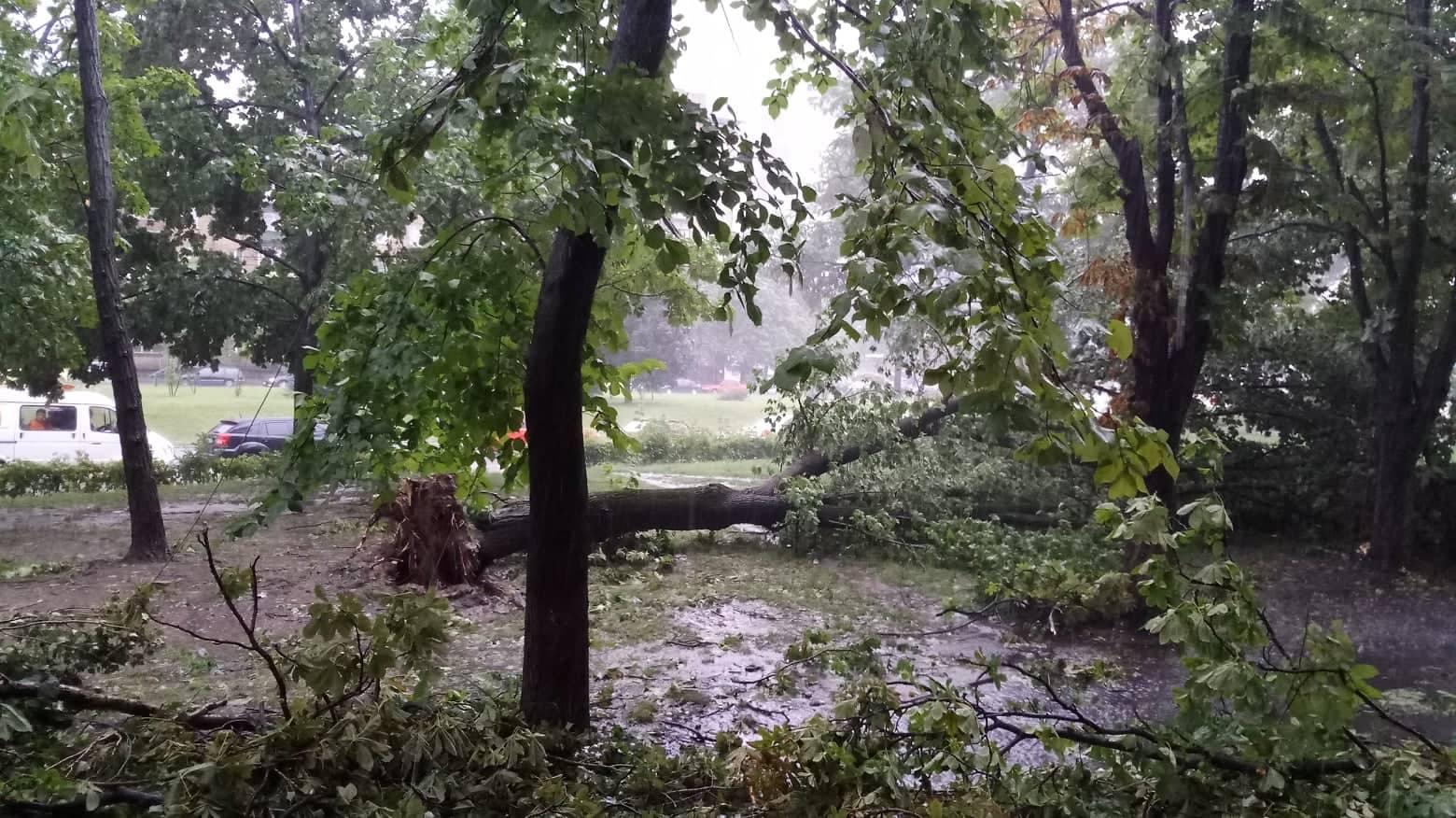 Буря в Киеве парализовала движение транспорта, повалены десятки деревьев