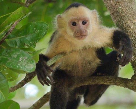 Більше половини видів приматів опинилися під загрозою зникнення