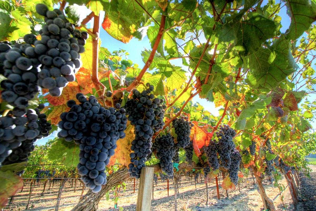 Поздравление речнику, картинки виноградников крыма