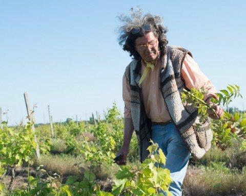 На Одещині підпалили виноградники французького винороба