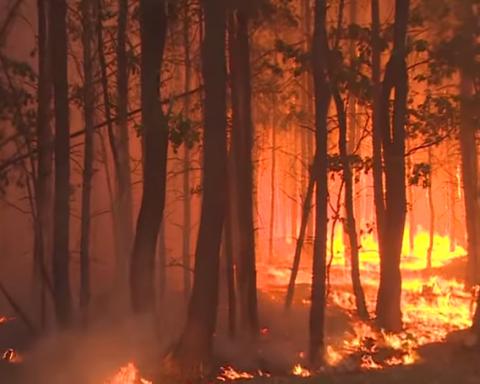 Возле Берлина пылают леса: людей массово эвакуируют