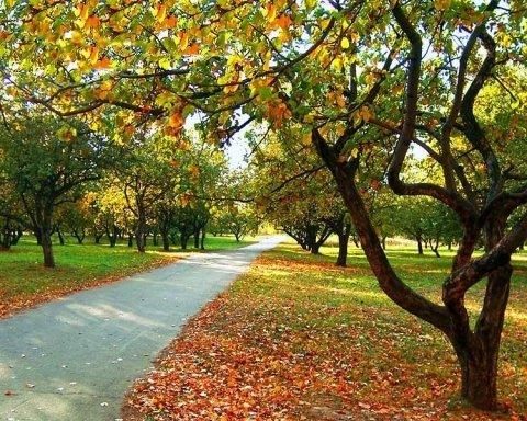 Осінь затримується: яка погода очікує на українців 21 вересня