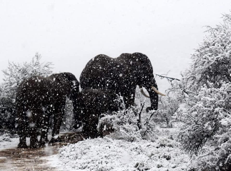 У Африці випав сніг посеред літа: яскраві кадри