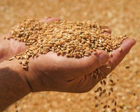 В Україні отруїли зерно, люди масово гинуть