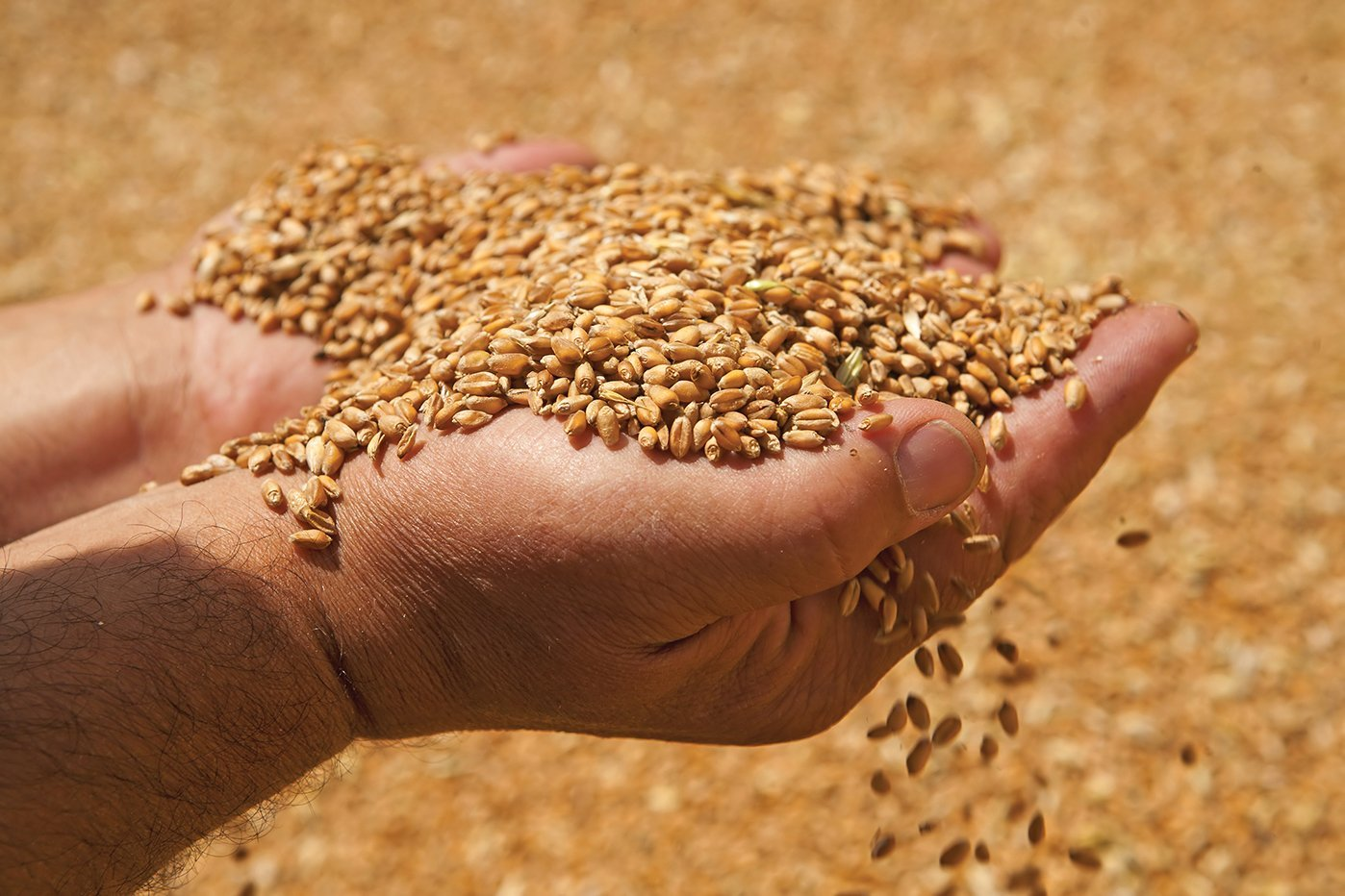 В Украине отравили зерно, люди массово погибают