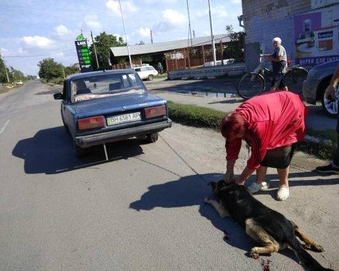 Бессердечная пенсионерка пыталась избавиться от своей собаки особо жестоким способом
