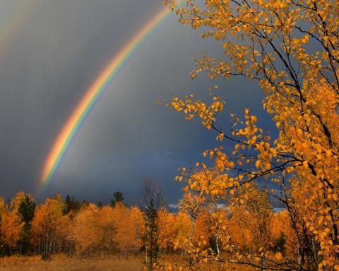 Синоптик рассказала, где в Украине будут дожди: свежий прогноз погоды