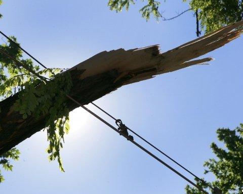 Стихия во Львовской области: дерево разбило внедорожник