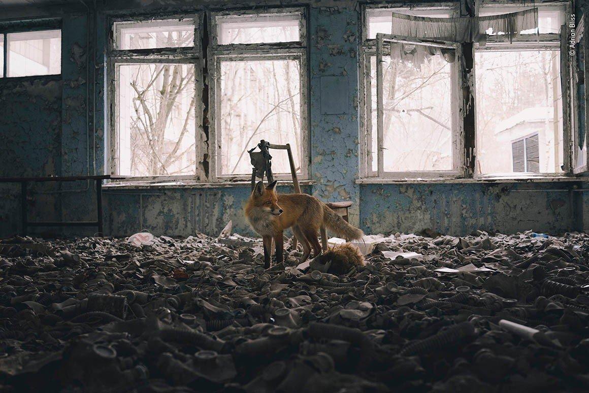 Фото з Чорнобиля визнали найкращим на конкурсі в Британії