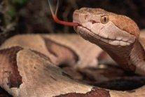 В Днепре змея заползла в квартиру на седьмом этаже
