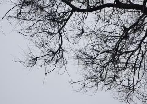 Непогода убивает: украинец погиб под поваленным деревом