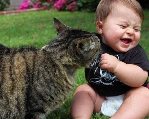 Ученые заявили об опасности кошек для здоровья человека