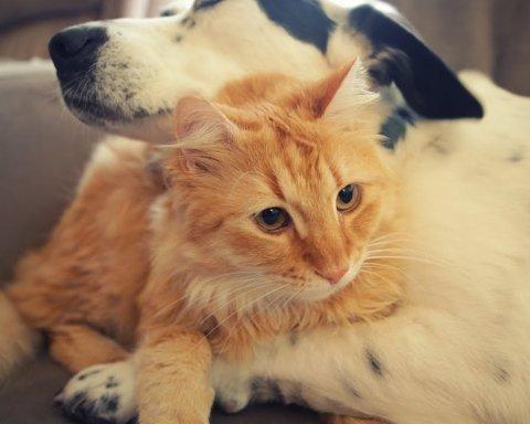 Американцам официально запретили есть кошек и собак