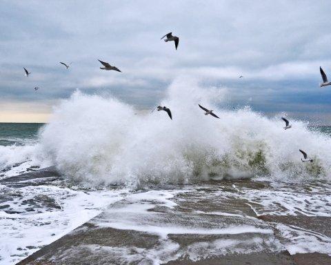 Огидно: в морі біля узбережжя Одеси плавають трупи тварин
