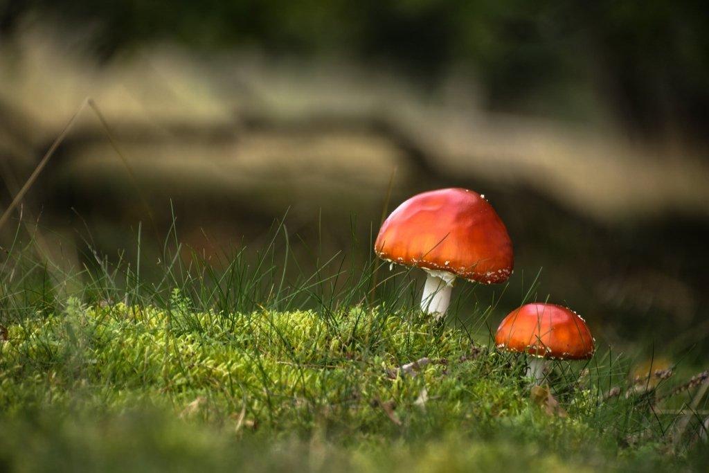 Украинцы массово гибнут от отравления грибами: жуткая статистика