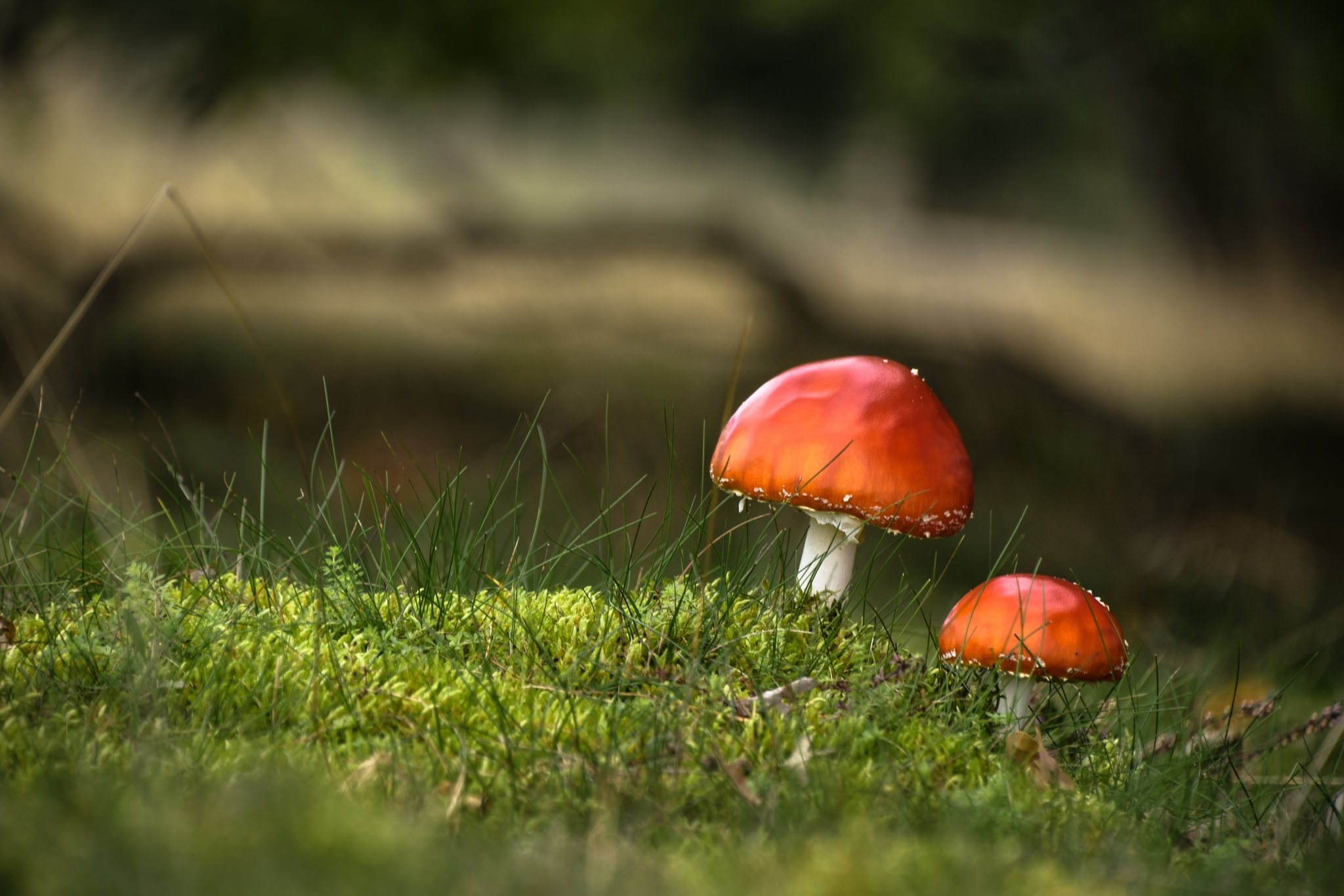 Українці масово гинуть від отруєння грибами: моторошна статистика