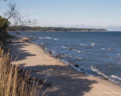 «Химическая атака»: в Крыму из-за отравления началось массовое вымирание