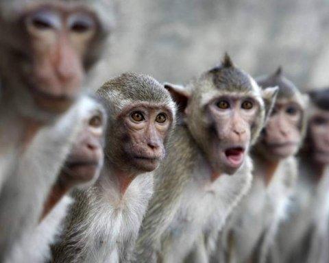 Восстание обезьян: стая животных забила мужчину до смерти