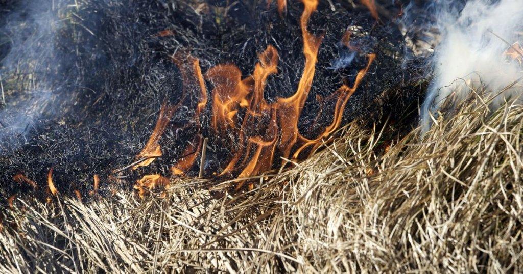 Супрун рассказала, чем опасны поджоги после сбора урожая
