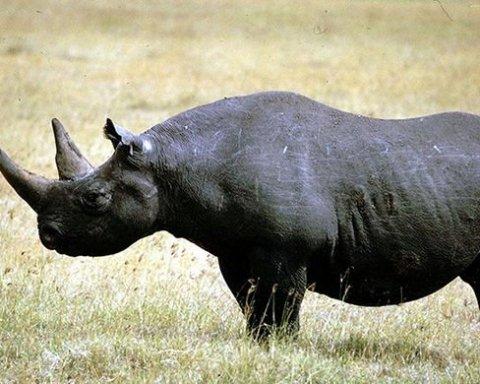 Смотрите на эти фото, вы больше никогда не увидите этих животных:  на Земле началась 6 волна вымирания