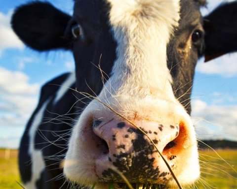 В Великобритании создали Uber для коров