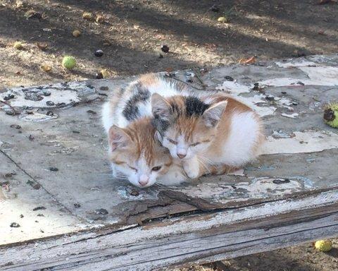 У місті-катастрофі в Криму гинуть тварини і нема чим дихати: нові фото з окупації