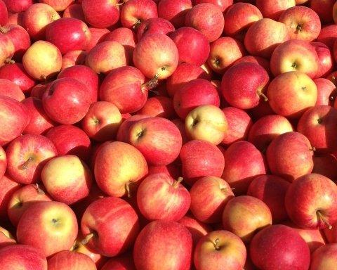 Как правильно есть яблоки, чтобы они принесли максимальную пользу