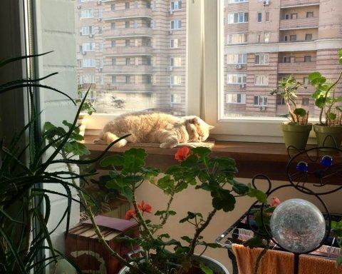 Как в Украину приходят холода: синоптик дала свежий прогноз погоды