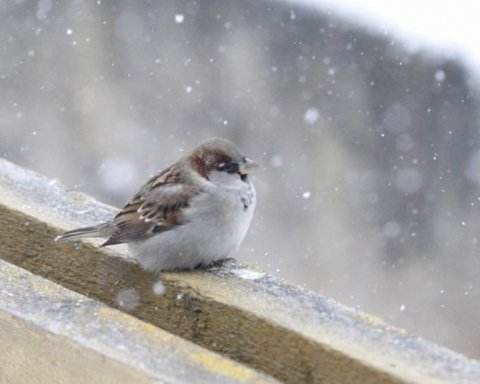 Во Львове выпал первый снег: впечатляющие кадры