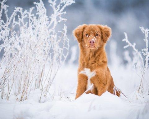 Люті морози: синоптики налякали українців прогнозом погоди