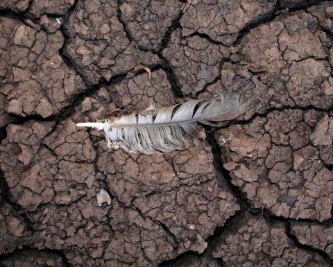 За крок від катастрофи: у людей залишилося 10 років, щоб врятувати Землю