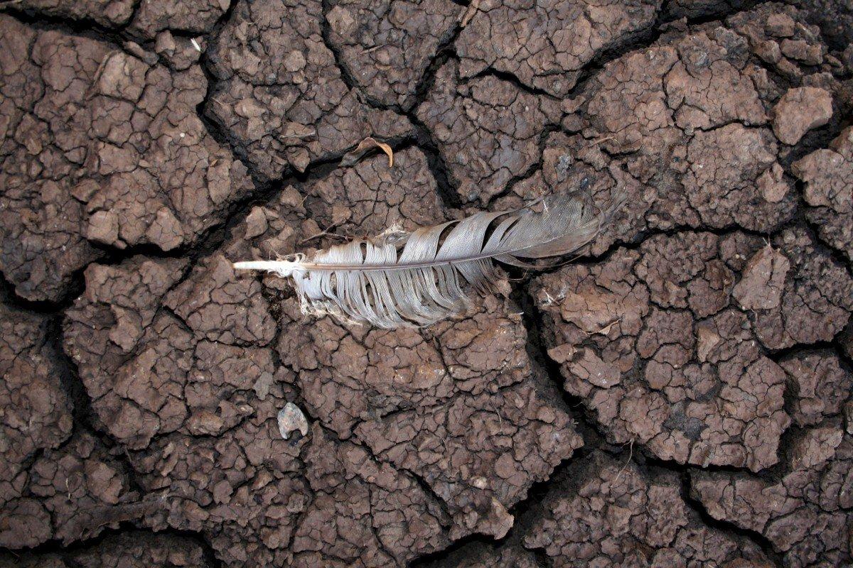 На Землі закінчується вода: чому зникає необхідна для життя речовина