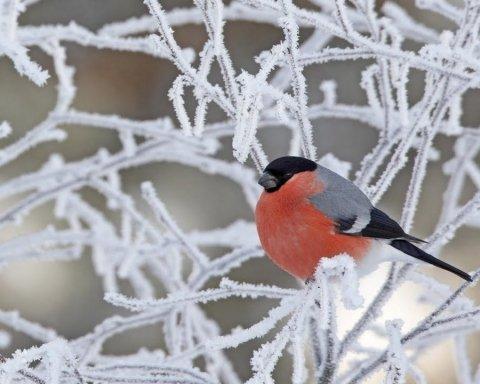 15 градусів морозу: синоптики розповіли, де в Україні буде найхолодніше