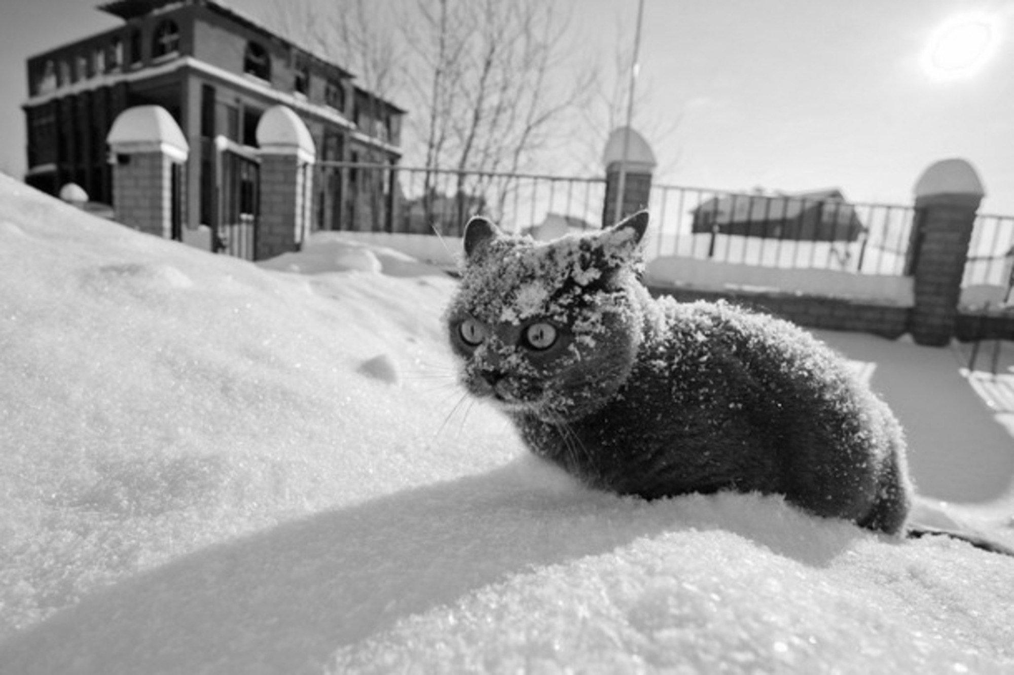Прикольные картинки про мартовскую погоду